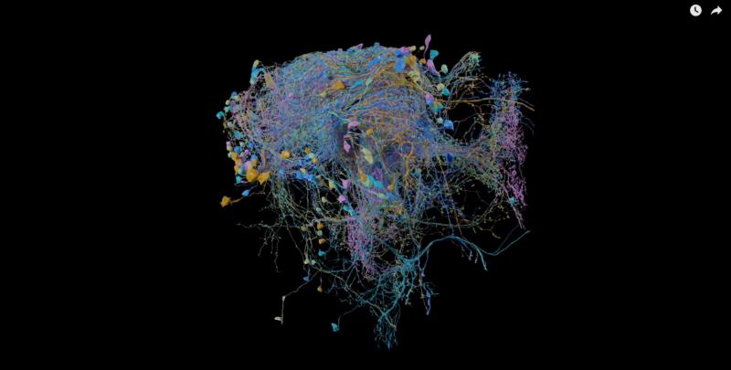 ce-ne-arata-cea-mai-detaliata-harta-a-conexiunilor-din-creier